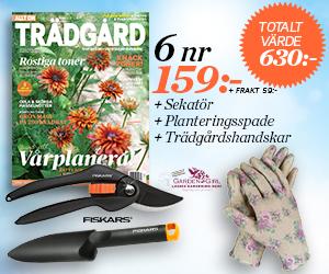allt-om-tradgard-sekator-plantspade-handskar